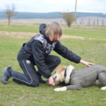 Любить собаку = учить собаку