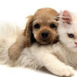 Хозяева на работе. Щенок и кошка остаются одни...