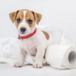 Как научить щенка ходить в туалет на улице.
