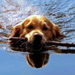 Утром - купание, вечером - голосование