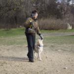 Кормить ли собаку перед дрессировкой?