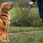 Как обучают собак