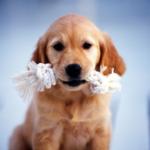 Припадочная, или как умотать щенка на прогулке