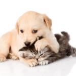 Щенок и кошка. Вечерние бесилки.