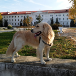 Какую амуницию я использую для комфортной прогулки с собакой (много фото)