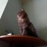 3 (три) странности кошки Маняхи