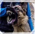 Что произойдёт, если отдать собаку на воспитание кинологу, а потом забрать её домой...