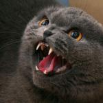 Ценный биоматериал, неведомая зверушка Няша, кот-матюгальник и подозрительный доктор  Павел Сергеевич