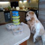 """Как мы обеспечиваем собаку свежим мясом. """"Сливаю"""" контакты поставщика."""