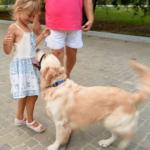 Корректировка поведения собаки. Наша история с ЭШО (часть 1)