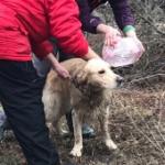 Рабочий пёс Куба, или Как мы стирали собаку в бутылке воды