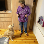 Скандинавская ходьба с собакой. Доказываю - это возможно.