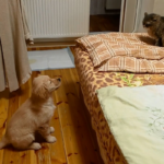 Последний день карантина. Ляля ворует курицу и считает свои лапы (+аудио)