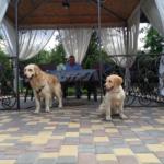 Чебуреки, салатики и мы с собаками в татарском кафе (+аудио)