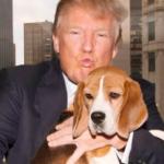 Как зовут собаку Трампа. Маня проводит кастинг
