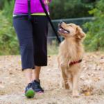 Как подготовиться к прогулке со щенком