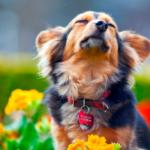 """#СчастьеПодНогами. Краткий """"катехизис"""" для желающих пристроить животное"""