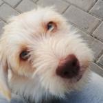 #СчастьеПодНогами. Спасение собаки глазами собаки