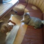 Кошкины уроки
