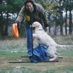 """Почему я перестала обучать собаку """"по Ютубу"""" (+видео)"""