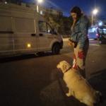 Приключения Булки в пути из Севастополя в Питер + Сюрприз для читателей