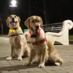 Рабочая собака. Куба спасает бабайку, а Ляля объявляет пьянству бой