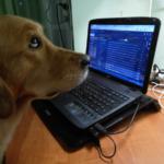 УравноБешеная Маня. DogAngel расширяет свои возможности
