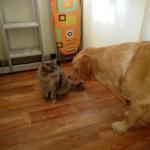 Кошкины уроки. Себялюбие