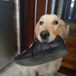 Ляля пишет явку с повинной, или - Собака как Инструмент Судьбы