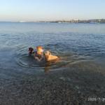 Наше утро с собаками. Море, опреснение и страсти общепита
