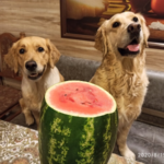 """Рассказываю про смешивание натурального корма и """"сушки"""" в питании моих собак"""