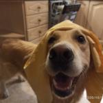 Как быстро высушить собаку, если нет банного халата и турбо-фена