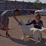 Как проходит выставка собак и про судью, которая меня до слез довела