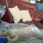 Про болячки моих собак - зачем я о них пишу