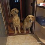 Доминирование у моих собак. Кто главнее?