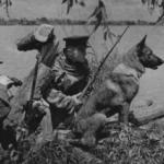Собаки Великой Отечественной. Помним, чтобы не повторить события той Войны