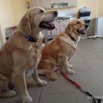 Куба и Ляля ставят прививку от бешенства и встречаются с заключенными котами-страдальцами