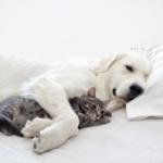 Щенок и кошка. Как жить?