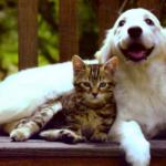 Кошка и собака. Кто в доме вредней.