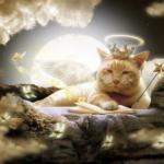 Как Ангел нашу кошку перевоспитывал. Часть 7