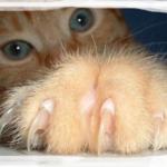 Подстричь кошке когти...