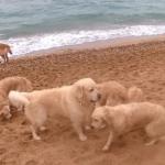 Где купаются с собаками?