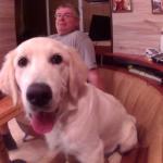 Собаке полгода. Что мы умеем?