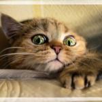 Мемуары кошки Маняхи, часть 2