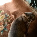 Президентский гектар для кошки Мани