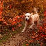 Искушение выше собачьих сил