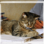Мемуары кошки Маняхи. Дособаческие времена. Часть 1