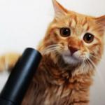 Мемуары кошки Маняхи, часть 3