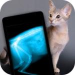 Как мы кошку на рентген носили