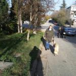 Как меня собака гулять выводила